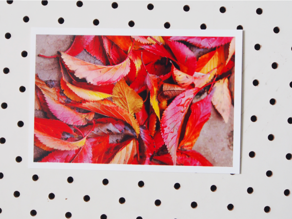 patrick leaves