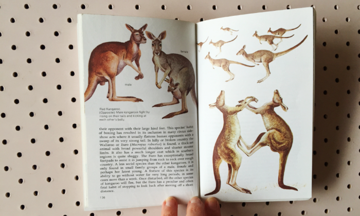 animals of australia and nz