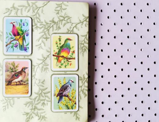birdy cards 5