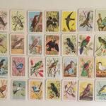 Bird Tea Cards