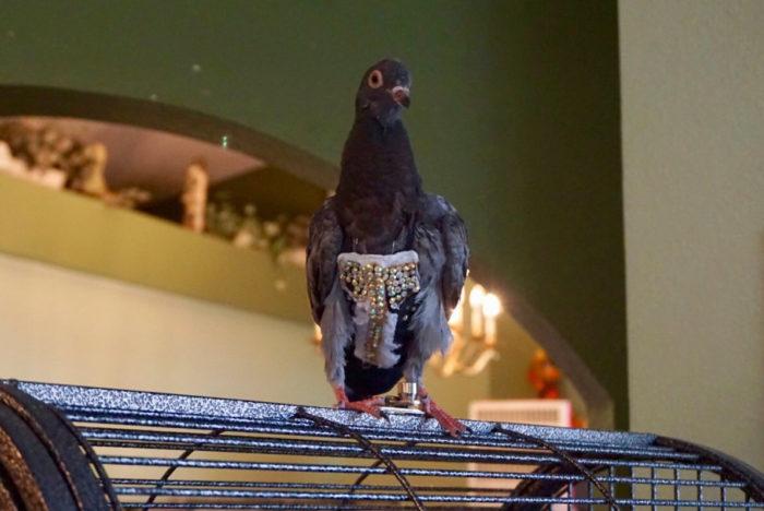 bedazzled pigeon