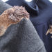 Sometimes You Have To Stitch Romping Squirrels, Don't You?